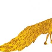 นกยูงทอง