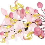 ดอกกัลปพฤกษ์