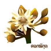 ดอกพิกุล